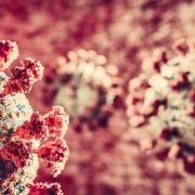 Coronavirus Covid-19 attack. Covid corona virus cells attacking lungs